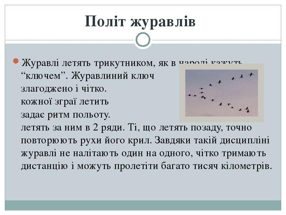 """Журавлі летять трикутником, як в народі кажуть """"ключем"""". Журавлиний ключ руха..."""