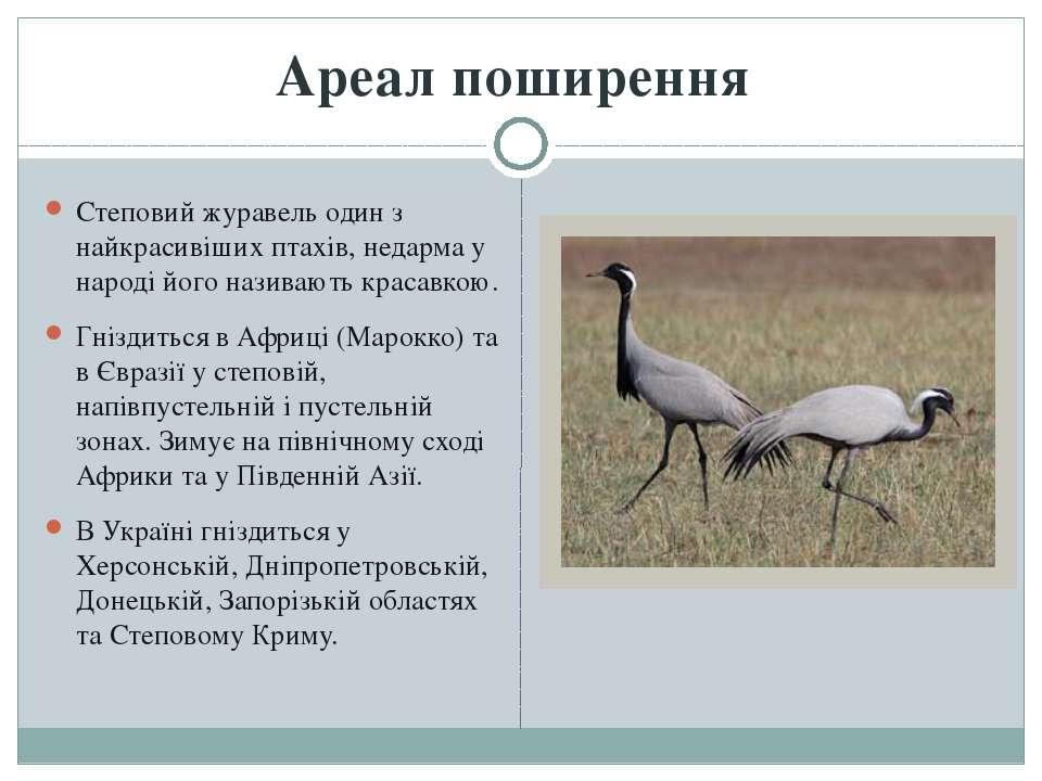Степовий журавель один з найкрасивіших птахів, недарма у народі його називают...