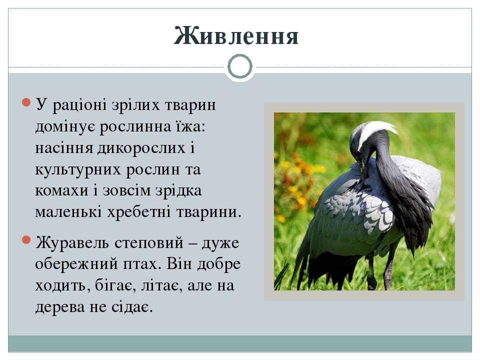 У раціоні зрілих тварин домінує рослинна їжа: насіння дикорослих і культурних...