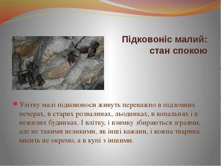 Улітку малі підковоноси живуть переважно в підземних печерах, в старих розвал...