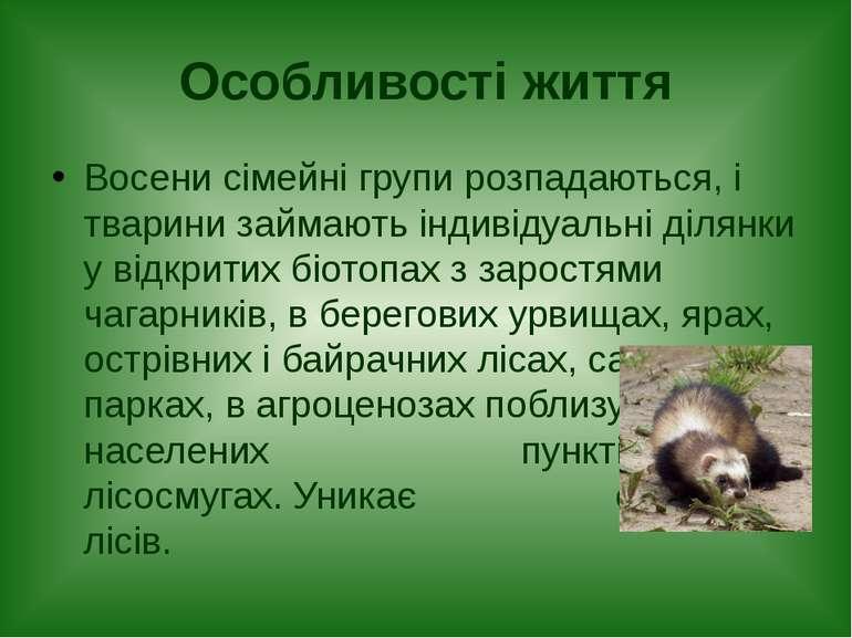 Особливості життя Восени сімейні групи розпадаються, і тварини займають індив...