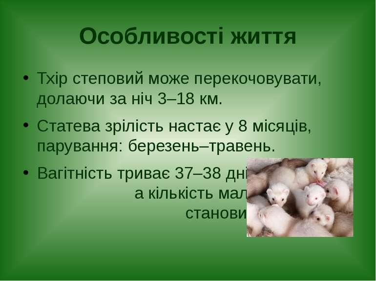 Особливості життя Тхір степовий може перекочовувати, долаючи за ніч 3–18 км. ...