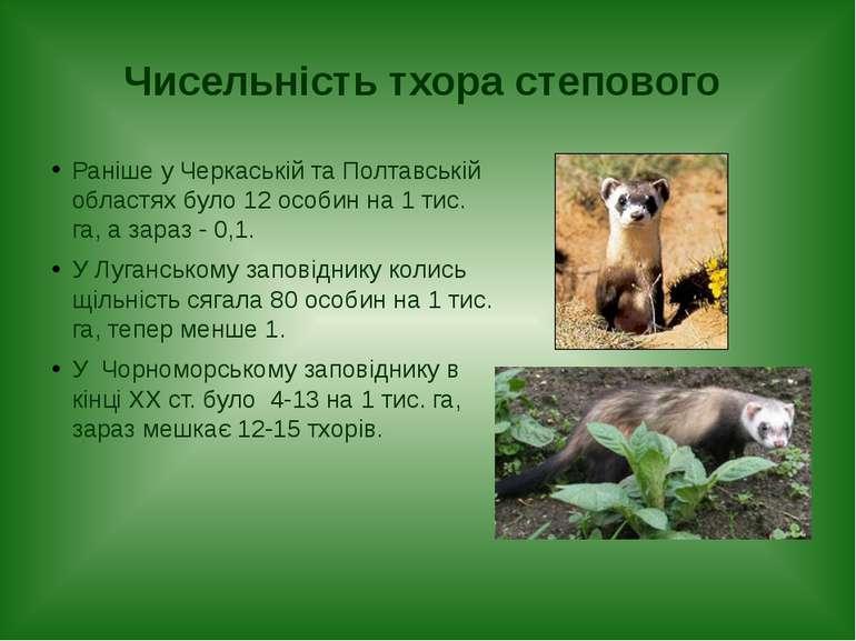 Чисельність тхора степового Раніше у Черкаській та Полтавській областях було ...