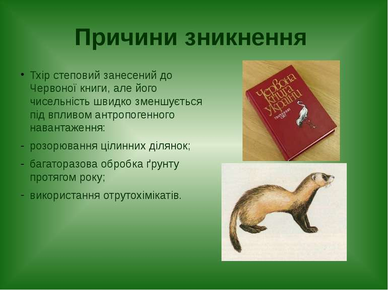 Причини зникнення Тхір степовий занесений до Червоної книги, але його чисельн...
