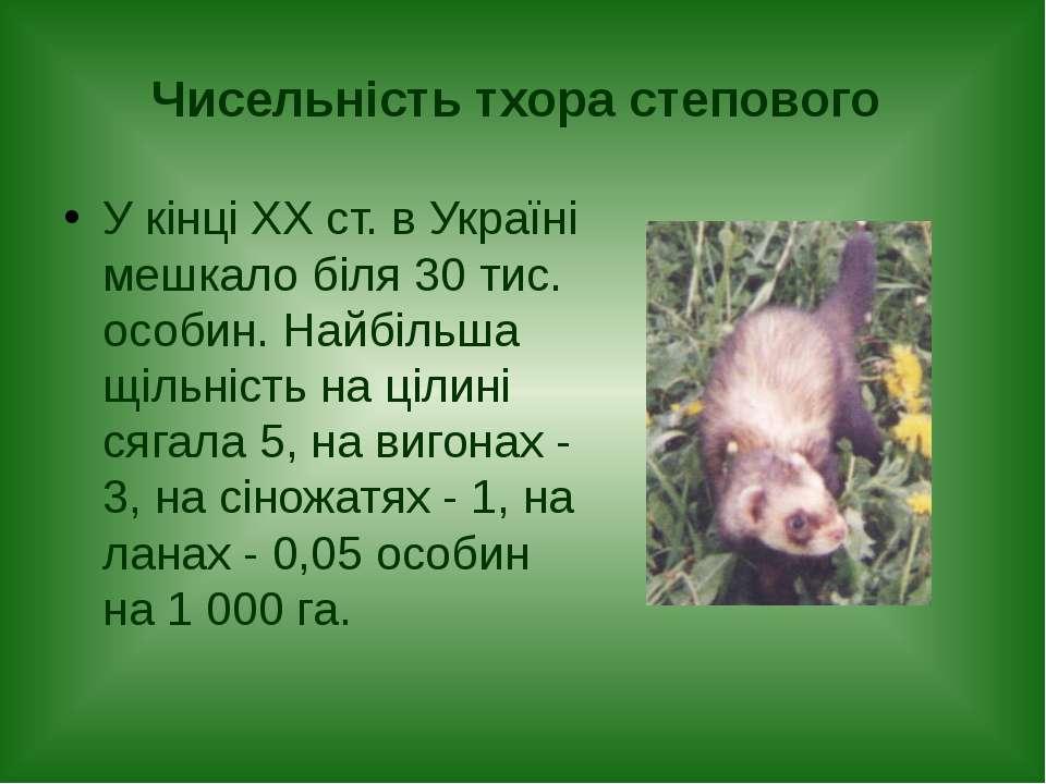 Чисельність тхора степового У кінці ХХ ст. в Україні мешкало біля 30 тис. осо...
