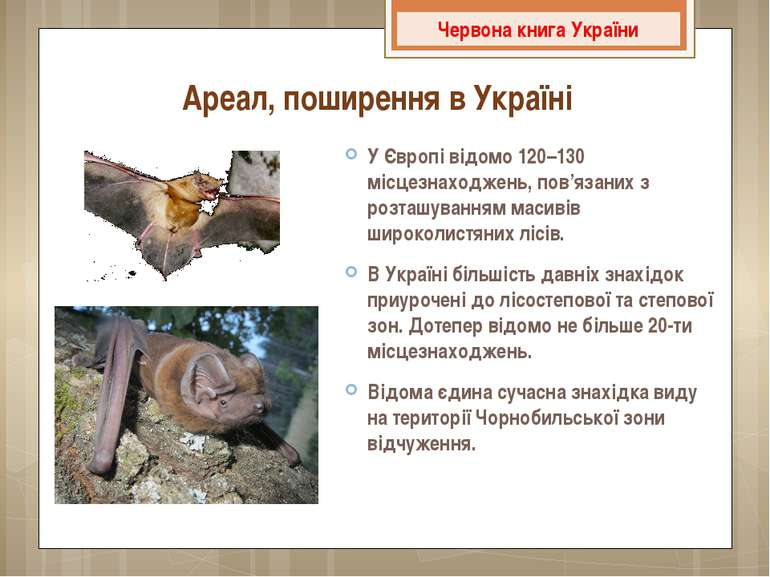 Ареал, поширення в Україні У Європі відомо 120–130 місцезнаходжень, пов'язани...