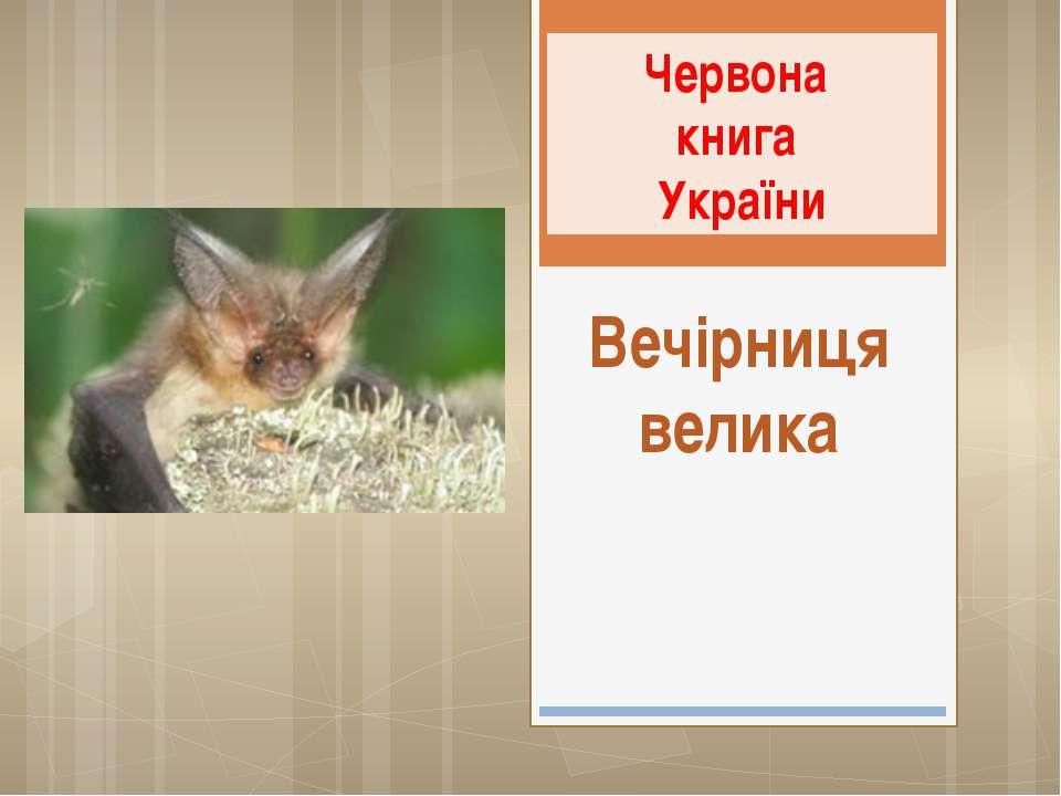Вечірниця велика Червона книга України