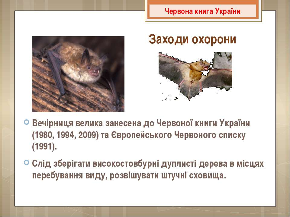 Вечірниця велика занесена доЧервоної книги України (1980, 1994, 2009) та Євр...