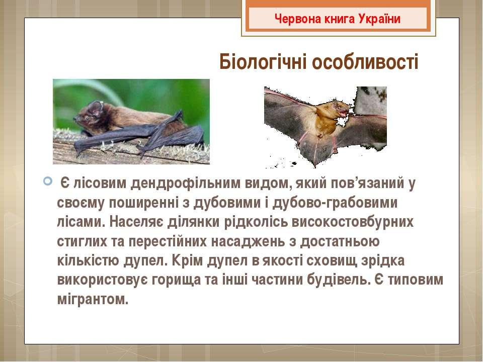 Є лісовим дендрофільним видом, який пов'язаний у своєму поширенні з дубовими...