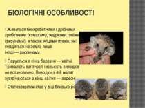 БІОЛОГІЧНІ ОСОБЛИВОСТІ Живитьсябезхребетнимиі дрібними хребетними (комахами...