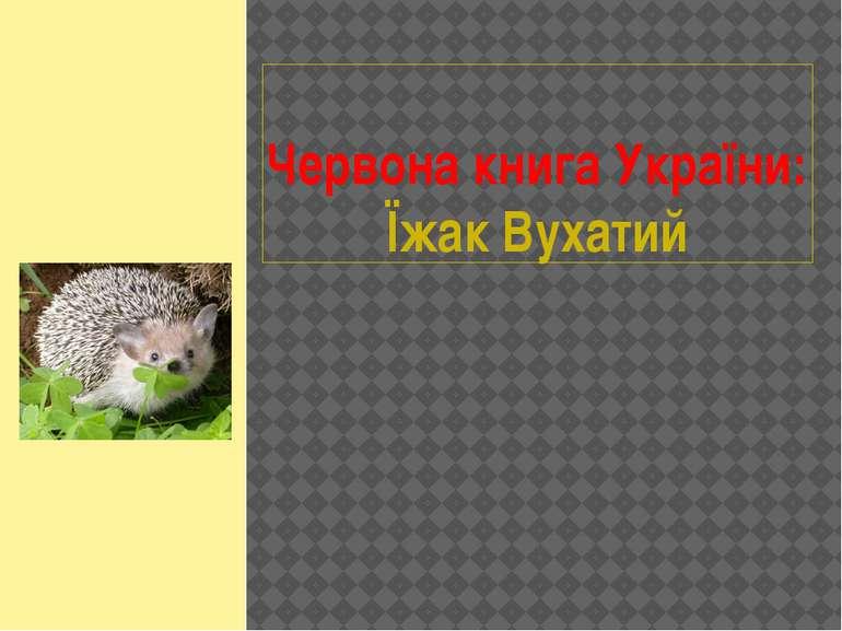 Червона книга України: Їжак Вухатий