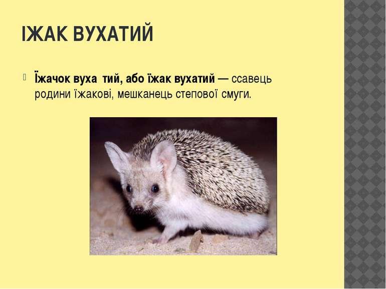 ІЖАК ВУХАТИЙ Їжачок вуха тий, або їжак вухатий— ссавець родиниїжакові, мешк...
