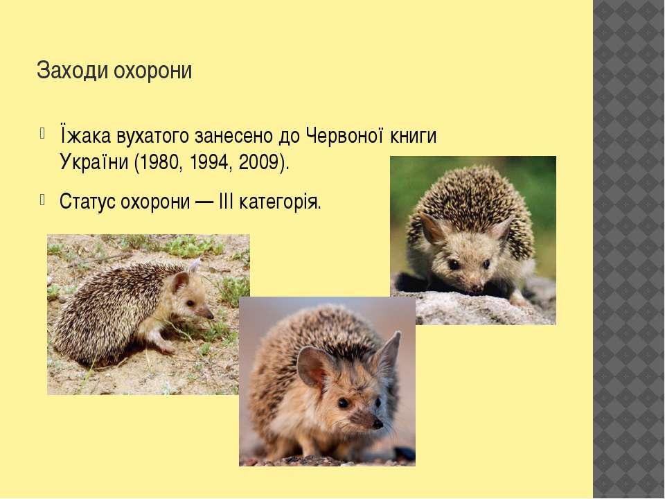 Заходи охорони Їжака вухатого занесено доЧервоної книги України(1980,1994,...