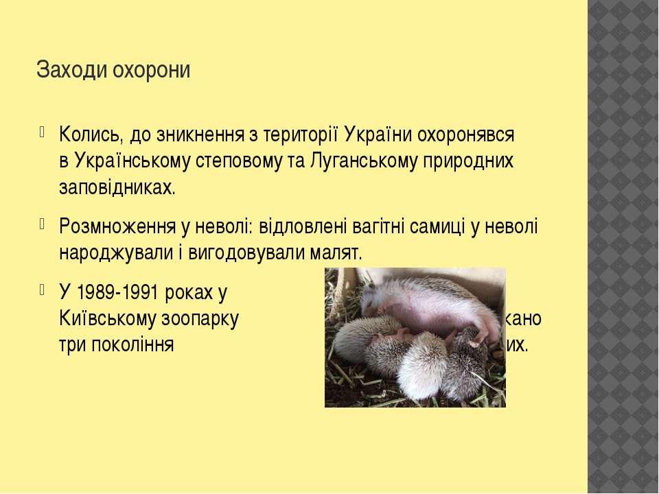 Заходи охорони Колись, до зникнення з території України охоронявся вУкраїнсь...