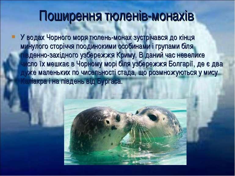 У водах Чорного моря тюлень-монах зустрічався до кінця минулого сторіччя поод...