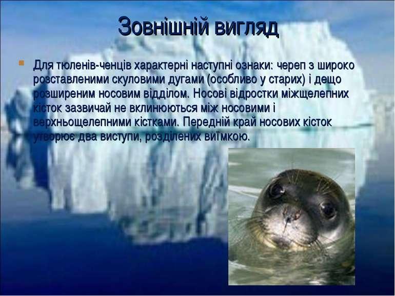 Зовнішній вигляд Для тюленів-ченців характерні наступні ознаки: череп з широк...