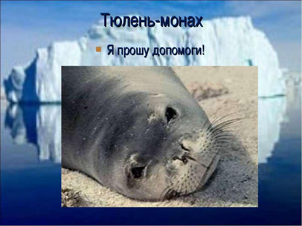Я прошу допомоги! Тюлень-монах