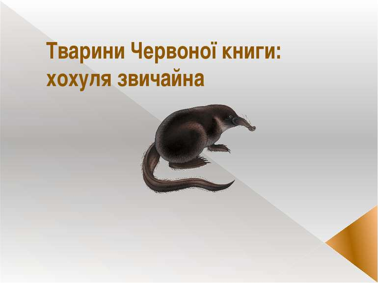 Тварини Червоної книги: хохуля звичайна