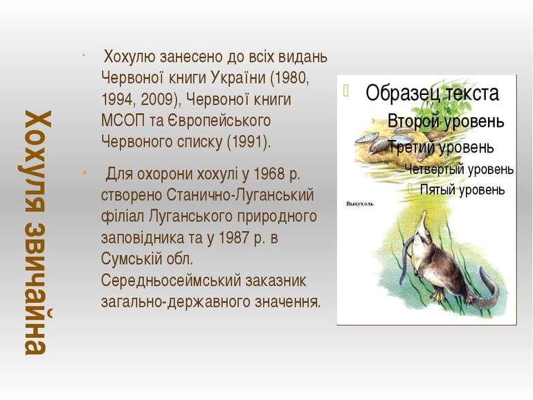 Хохулю занесено до всіх видань Червоної книги України (1980, 1994, 2009), Чер...