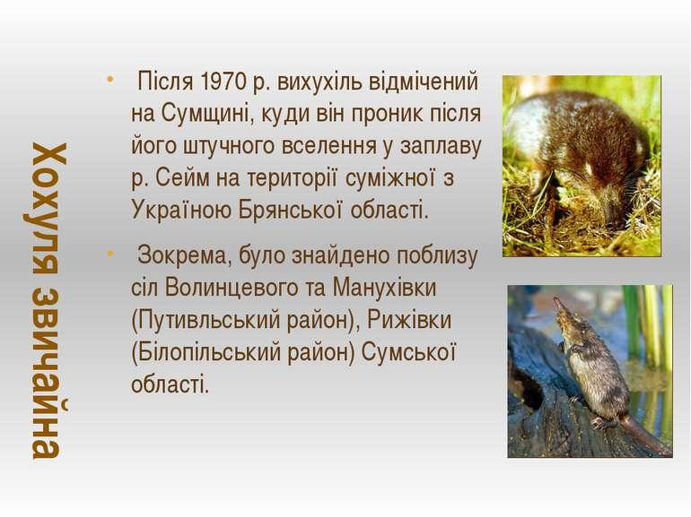 Після 1970 р. вихухіль відмічений на Сумщині, куди він проник після його штуч...