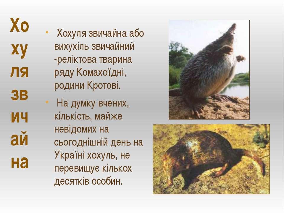 Хохуля звичайна Хохуля звичайна або вихухіль звичайний -реліктова тварина ряд...