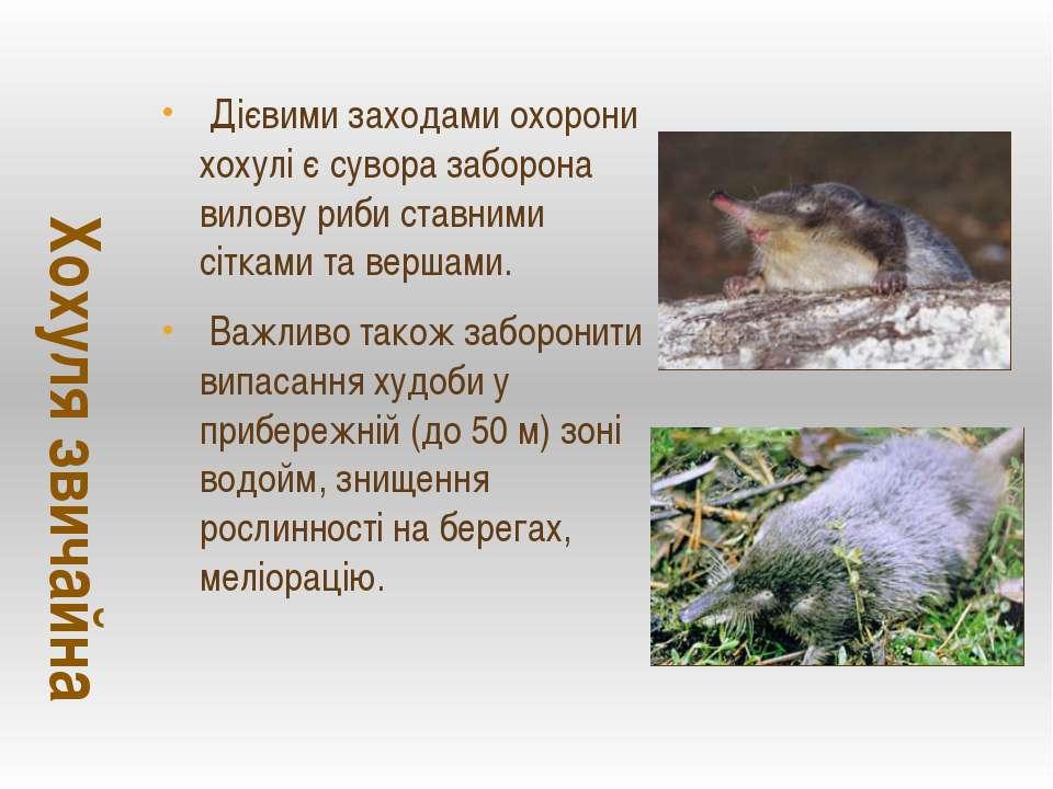 Дієвими заходами охорони хохулі є сувора заборона вилову риби ставними сіткам...