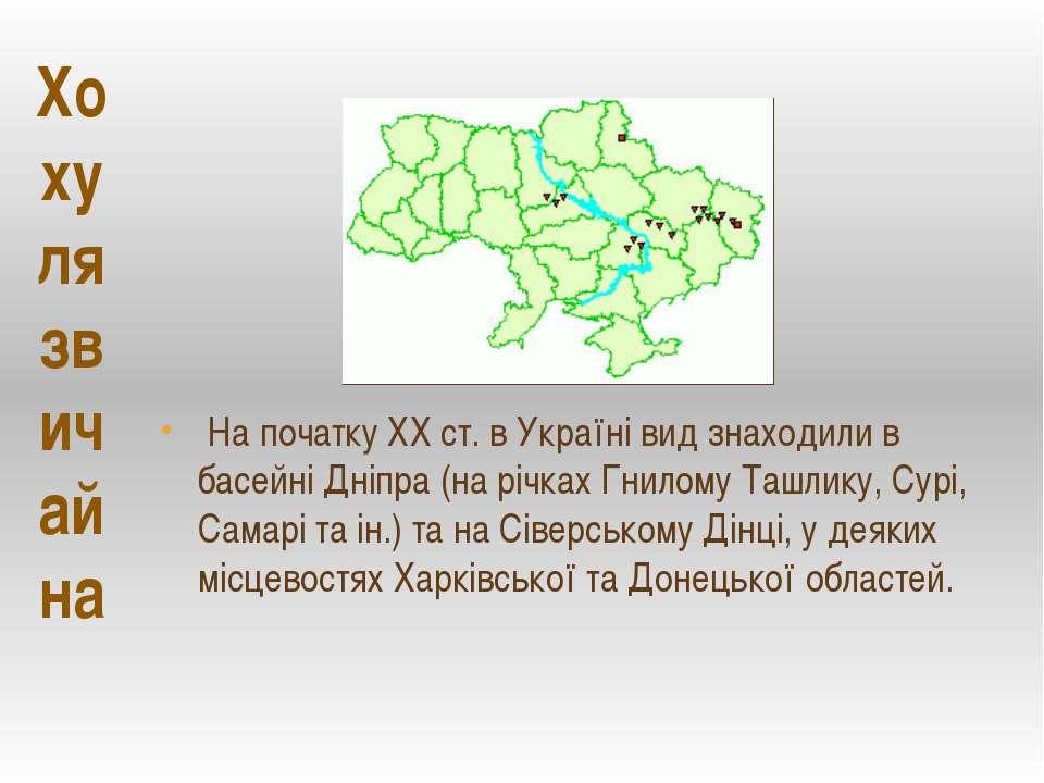 На початку ХХ ст. в Україні вид знаходили в басейні Дніпра (на річках Гнилому...