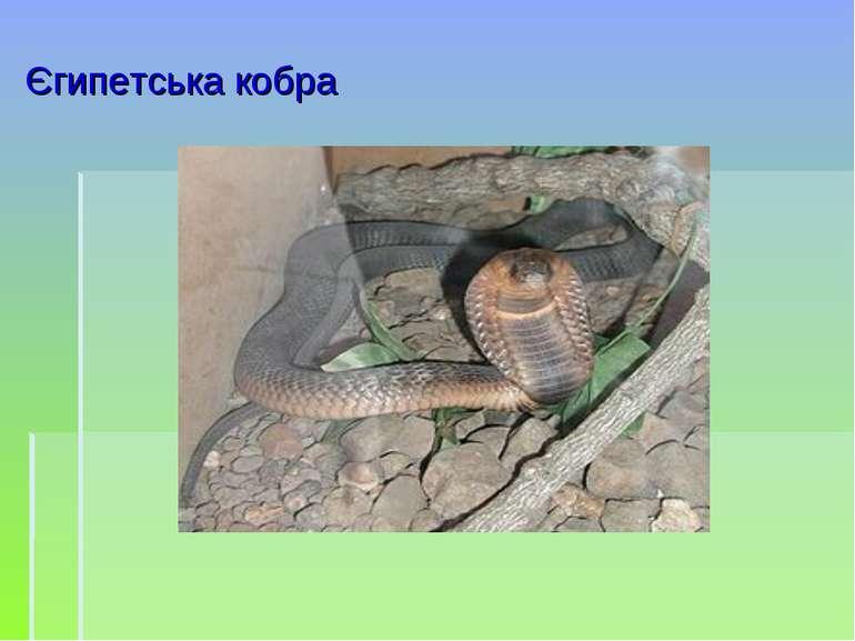 Єгипетська кобра