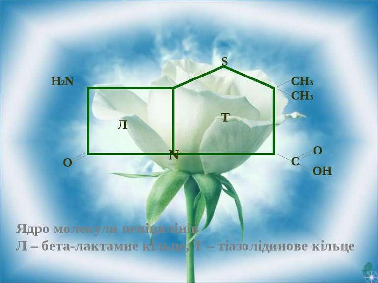 Ядро молекули пеніцилінів Л – бета-лактамне кільце, Т – тіазолідинове кільце ...