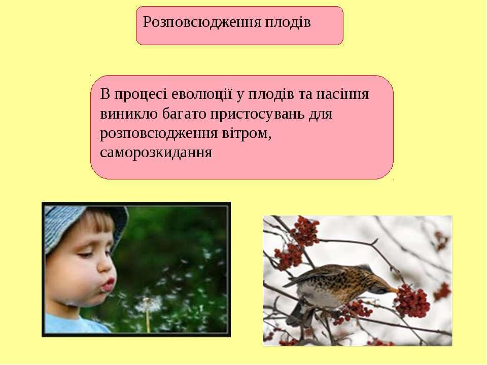 Розповсюдження плодів В процесі еволюції у плодів та насіння виникло багато п...