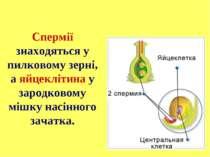 Спермії знаходяться у пилковому зерні, а яйцеклітина у зародковому мішку насі...