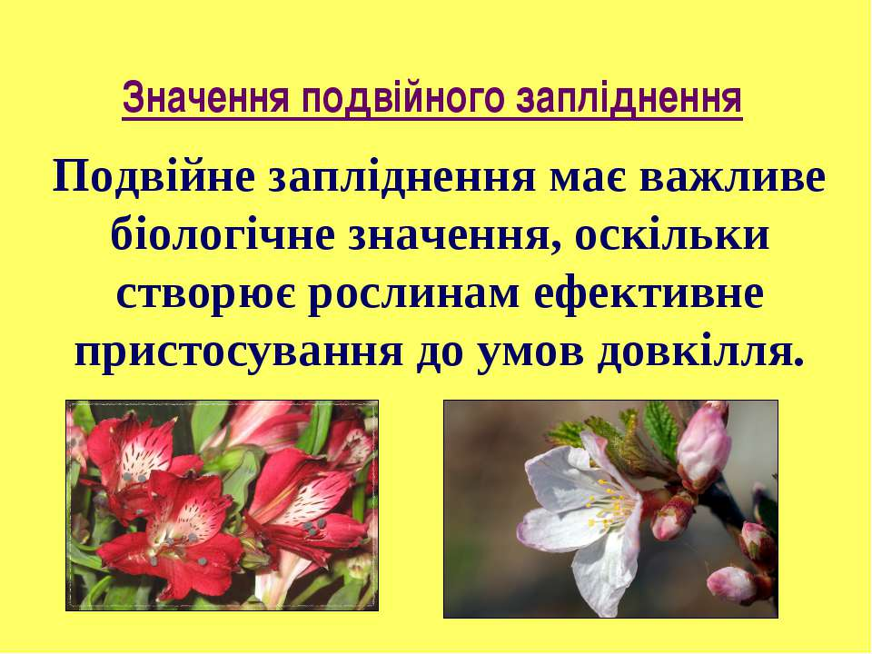 Подвійне запліднення має важливе біологічне значення, оскільки створює рослин...