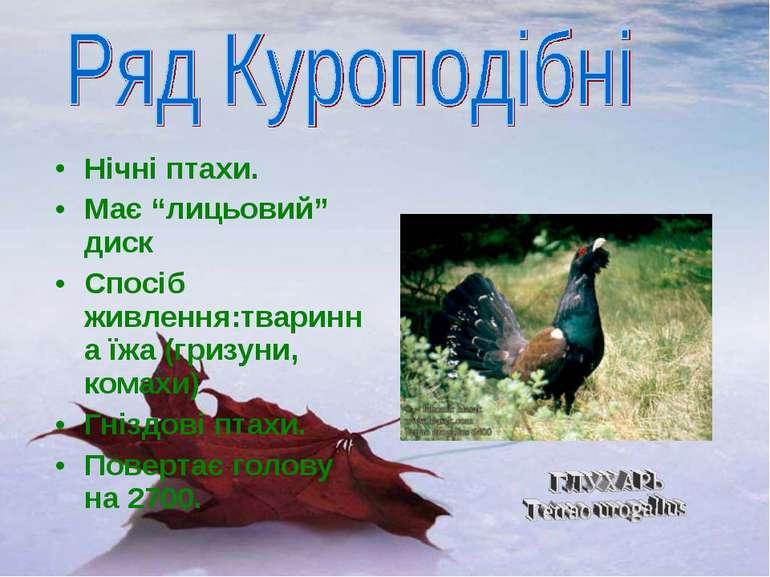 """Нічні птахи. Має """"лицьовий"""" диск Спосіб живлення:тваринна їжа (гризуни, комах..."""