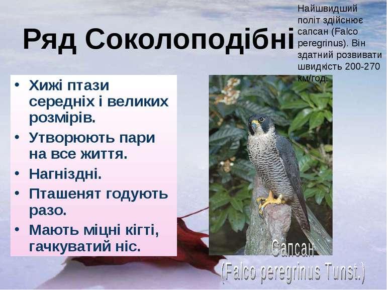 Ряд Соколоподібні Хижі птази середніх і великих розмірів. Утворюють пари на в...
