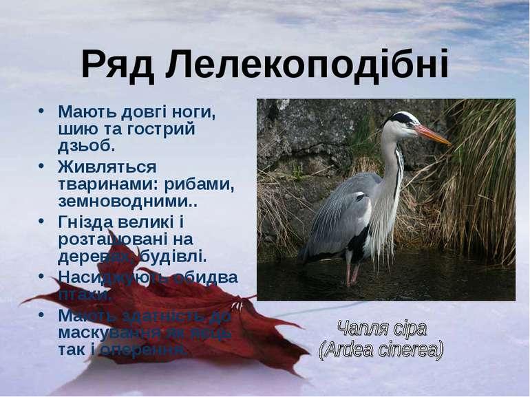 Ряд Лелекоподібні Мають довгі ноги, шию та гострий дзьоб. Живляться тваринами...