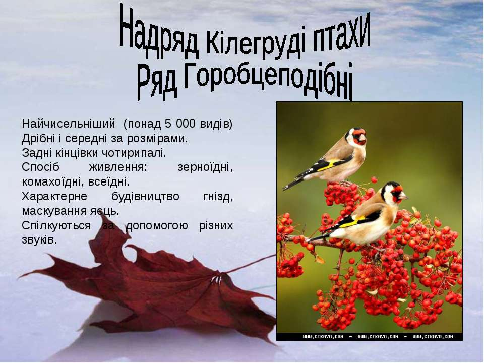 Найчисельніший (понад 5 000 видів) Дрібні і середні за розмірами. Задні кінці...
