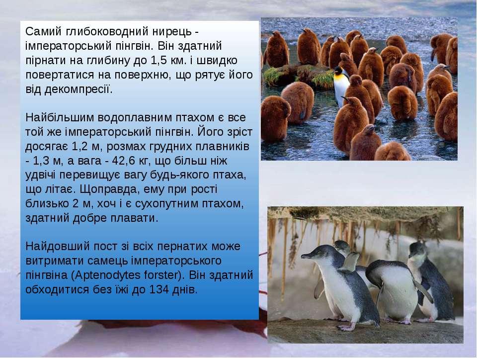 Самий глибоководний нирець - імператорський пінгвін. Він здатний пірнати на г...