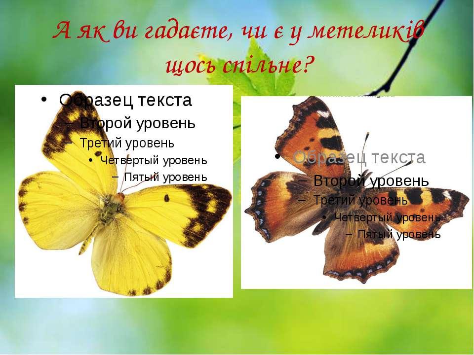 А як ви гадаєте, чи є у метеликів щось спільне?