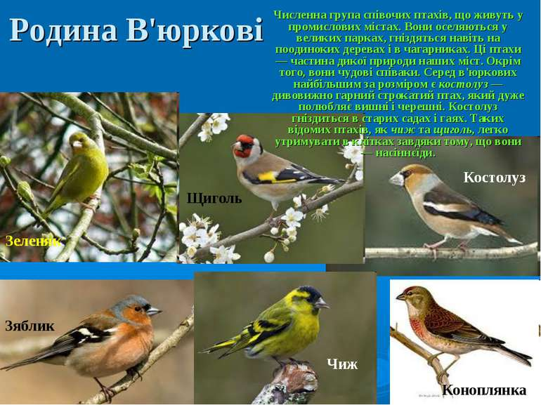 Родина В'юркові Численна група співочих птахів, що живуть у промислових міста...