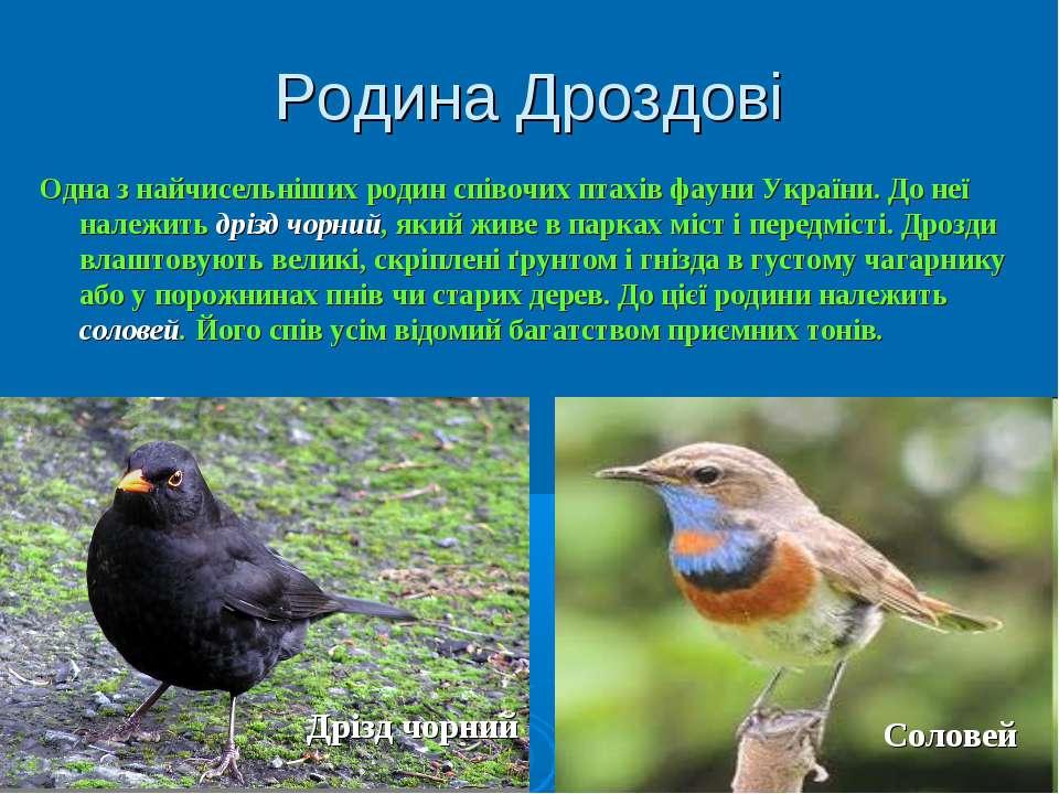 Родина Дроздові Одна з найчисельніших родин співочих птахів фауни України. До...