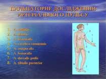 ПАЛЬПАТОРНЕ ДОСЛІДЖЕННЯ АРТЕРІАЛЬНОГО ПУЛЬСУ А. radialis A. ulnaris A. brachi...
