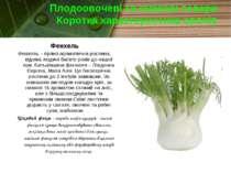 Плодоовочеві та смакові товари Коротка характеристика овочів Фенхель Фенхель ...