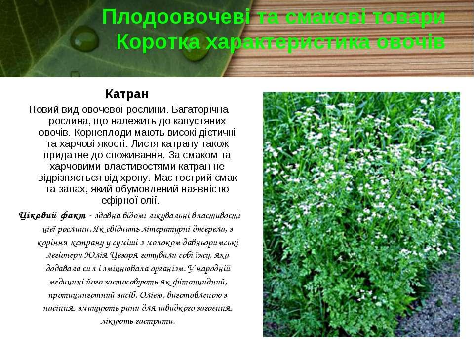Плодоовочеві та смакові товари Коротка характеристика овочів Катран Новий вид...
