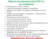 Ефекти від використання ЕМ-А у рослинництві Покращується схожість насіння Спр...