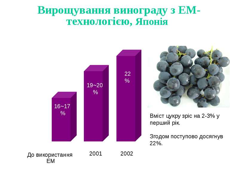 Вирощування винограду з ЕМ-технологією, Японія До використання EM 2001 2002 2...