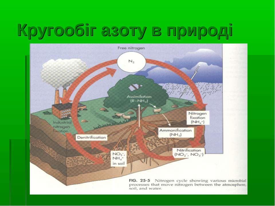 Кругообіг азоту в природі