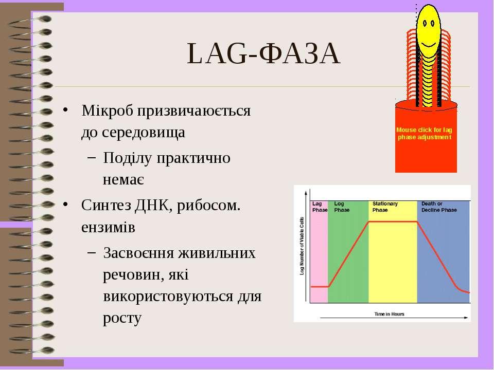 LAG-ФАЗА Мікроб призвичаюється до середовища Поділу практично немає Синтез ДН...