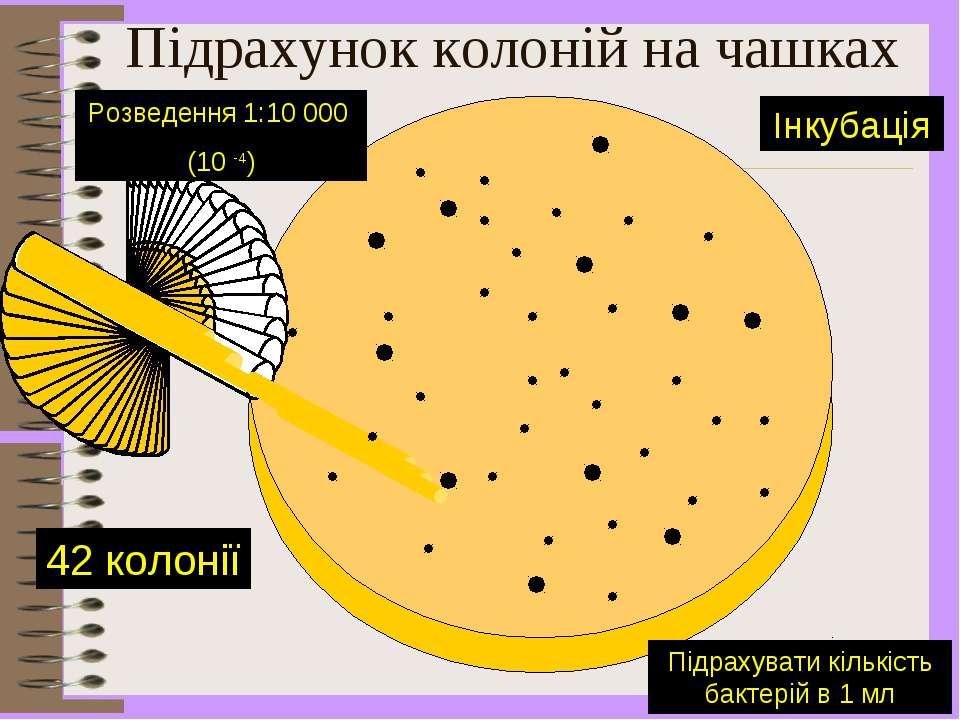 Підрахунок колоній на чашках 42 колонії Розведення 1:10 000 (10 -4) Підрахува...