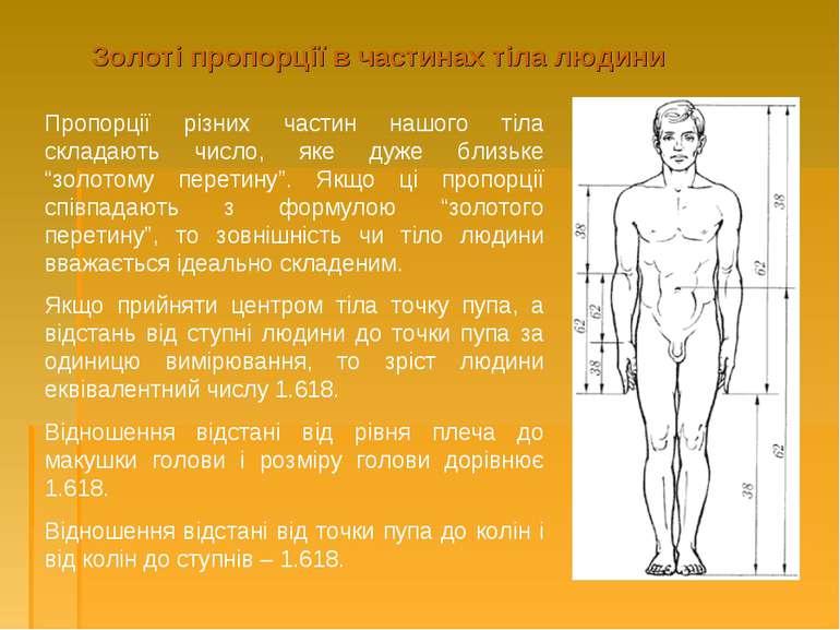 Золоті пропорції в частинах тіла людини Пропорції різних частин нашого тіла с...