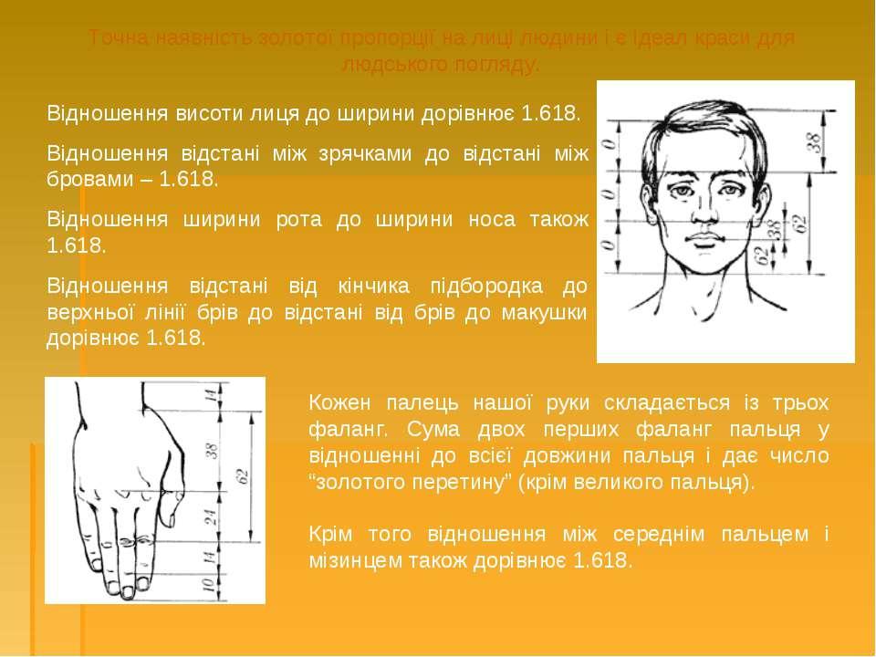 Точна наявність золотої пропорції на лиці людини і є ідеал краси для людськог...